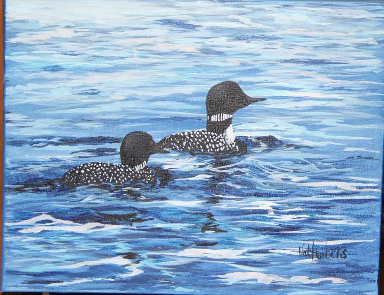 Loons In Agonquin Park